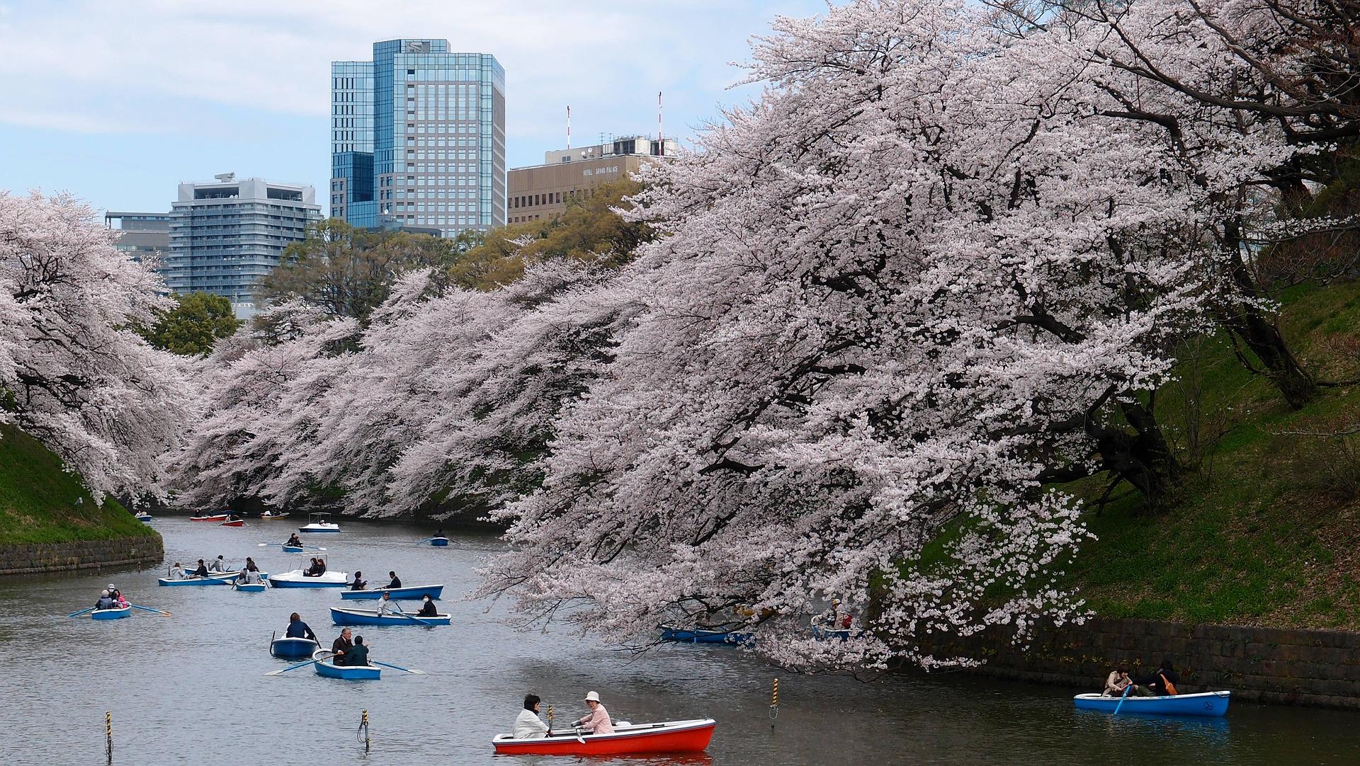 За Япония и цъфтежа на вишните сакура